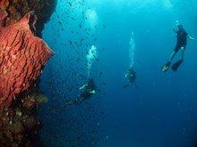 Diving in Phi Phi