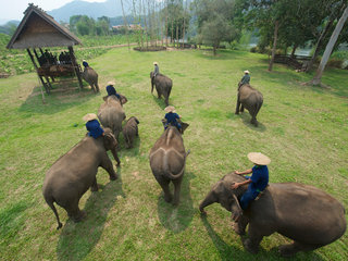 Lao Elephant Camp