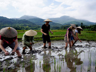 Luang Prabang - Living Land Rice Experience - Kuang Si Waterfall (B, L)