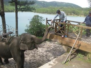 Elephant Ride (B, L)