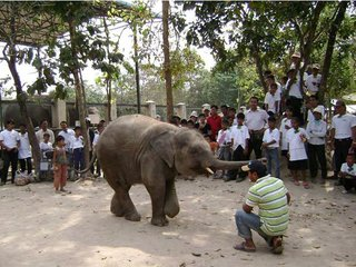 Phnom Tamao Wildlife Tour