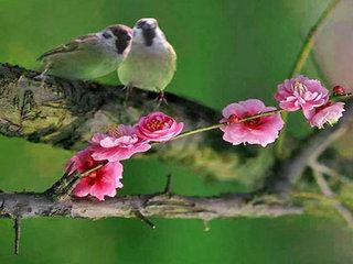 Vietnam Bird Watching