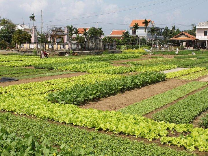 Tra Que Vegetabe Village